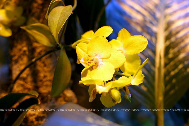 Московский репортаж, Москва, Аптекарский огород, Пальмовая оранжерея, Фестиваль орхидей