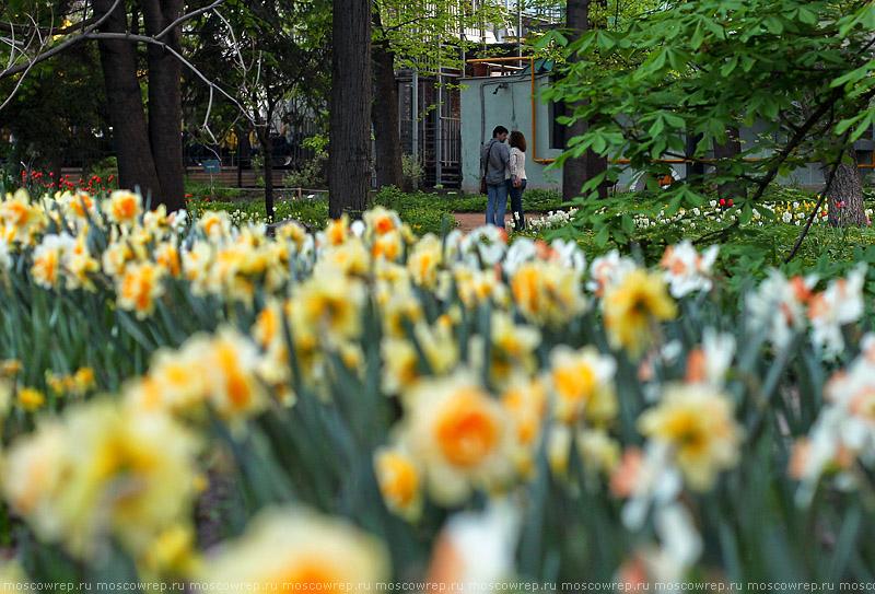 Московский репортаж, Москва, Аптекарский огород, Весенний фестиваль цветов