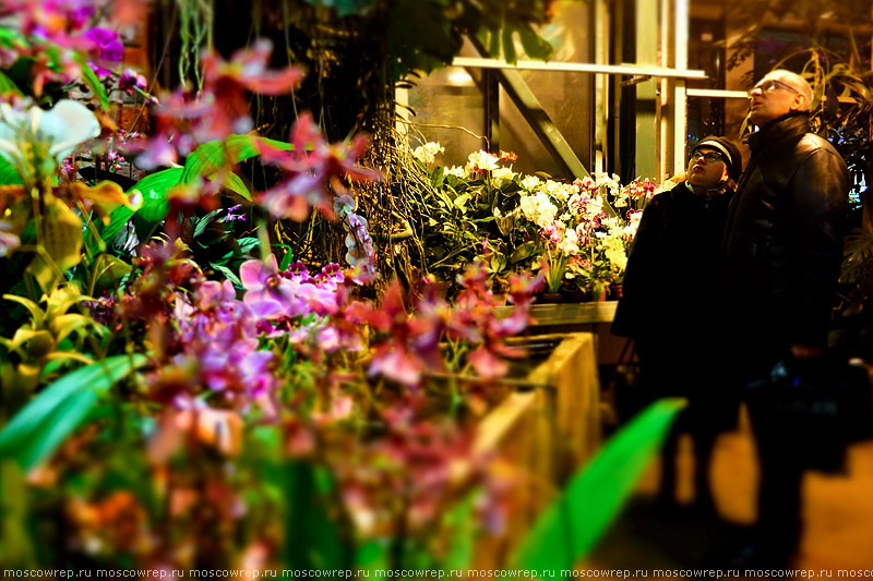 Московский репортаж, Москва, Аптекарский огород, фестиваль «Тропическая зима», Зимний фестиваль орхидей