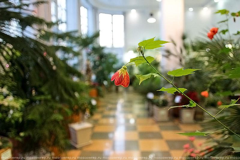 Москва, Московский репортаж, Новый год в царстве Флоры, Царицыно