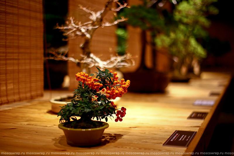 Москва, Московский репортаж, Аптекарский огород, Япония, бонсай, Мир в глиняной плошке