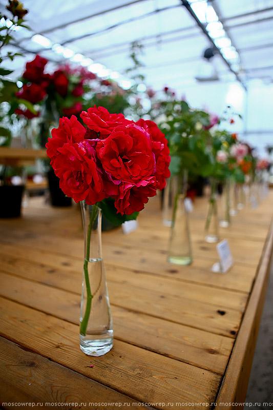 Москва, Московский репортаж, Аптекарский огород, Выставка роз и клематисов