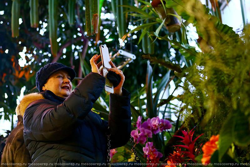 Москва, Московский репортаж, Аптекарский огород, Фестиваль «Тропическая зима»