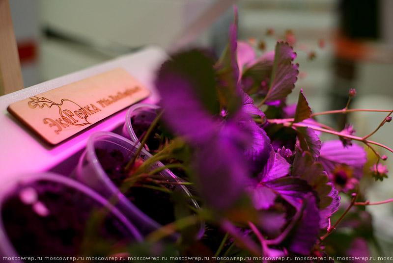 Москва, Московский репортаж, ВДНХ, Российская агропромышленная выставка «Золотая осень», агропром