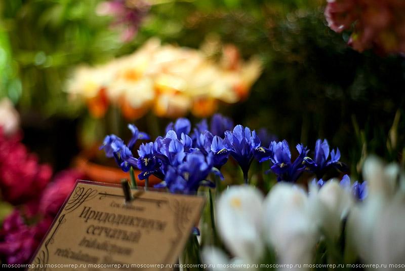 Москва, Московский репортаж, Аптекарский огород, Репетиция весны