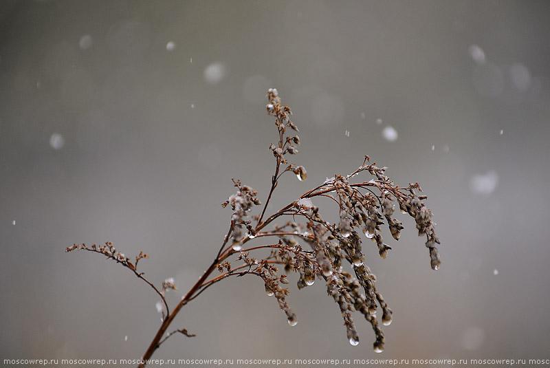 Московский репортаж, Москва, Лосиный остров, зима, снегопад